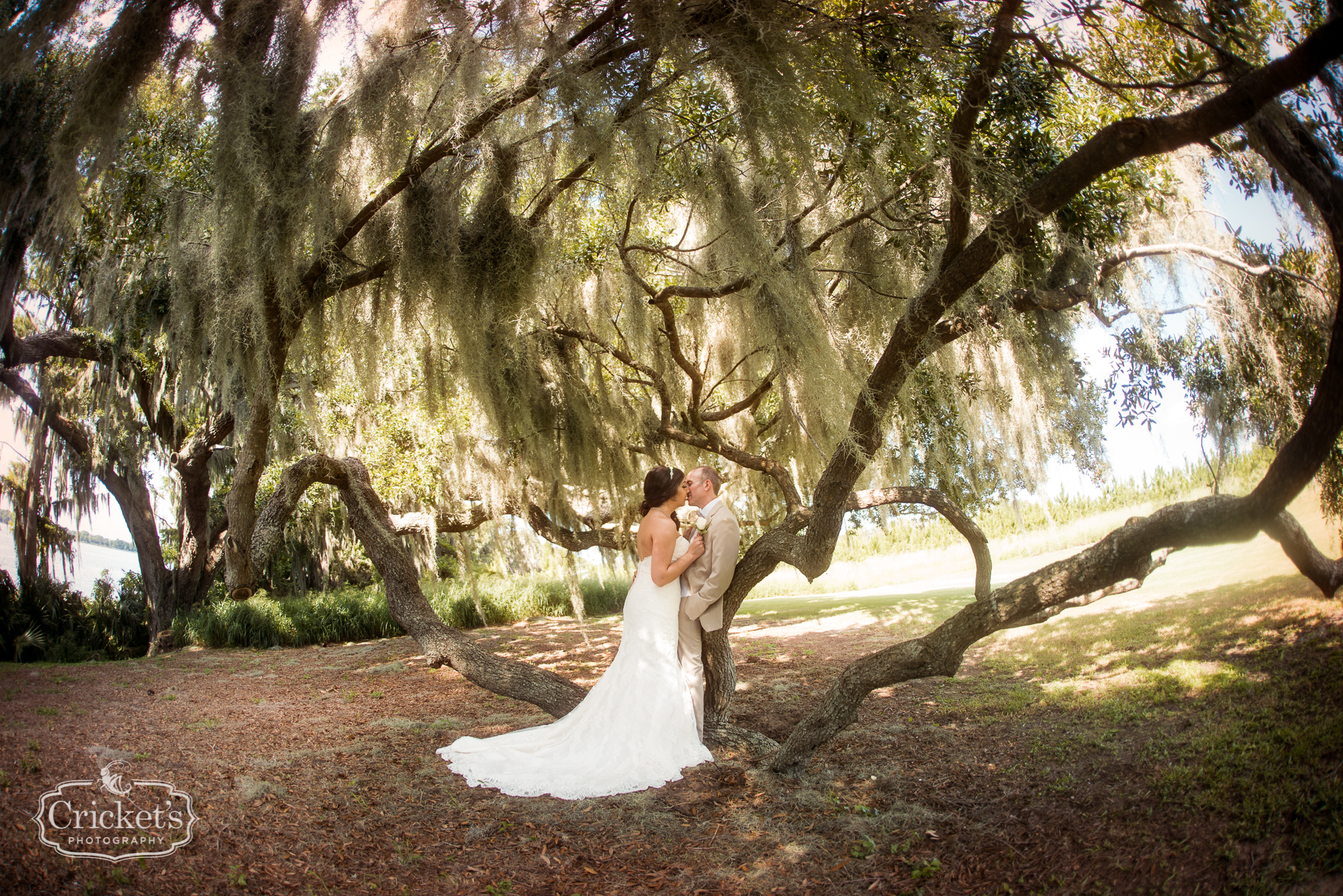 Bride and Groom sitting in oak tree for their wedding portrait