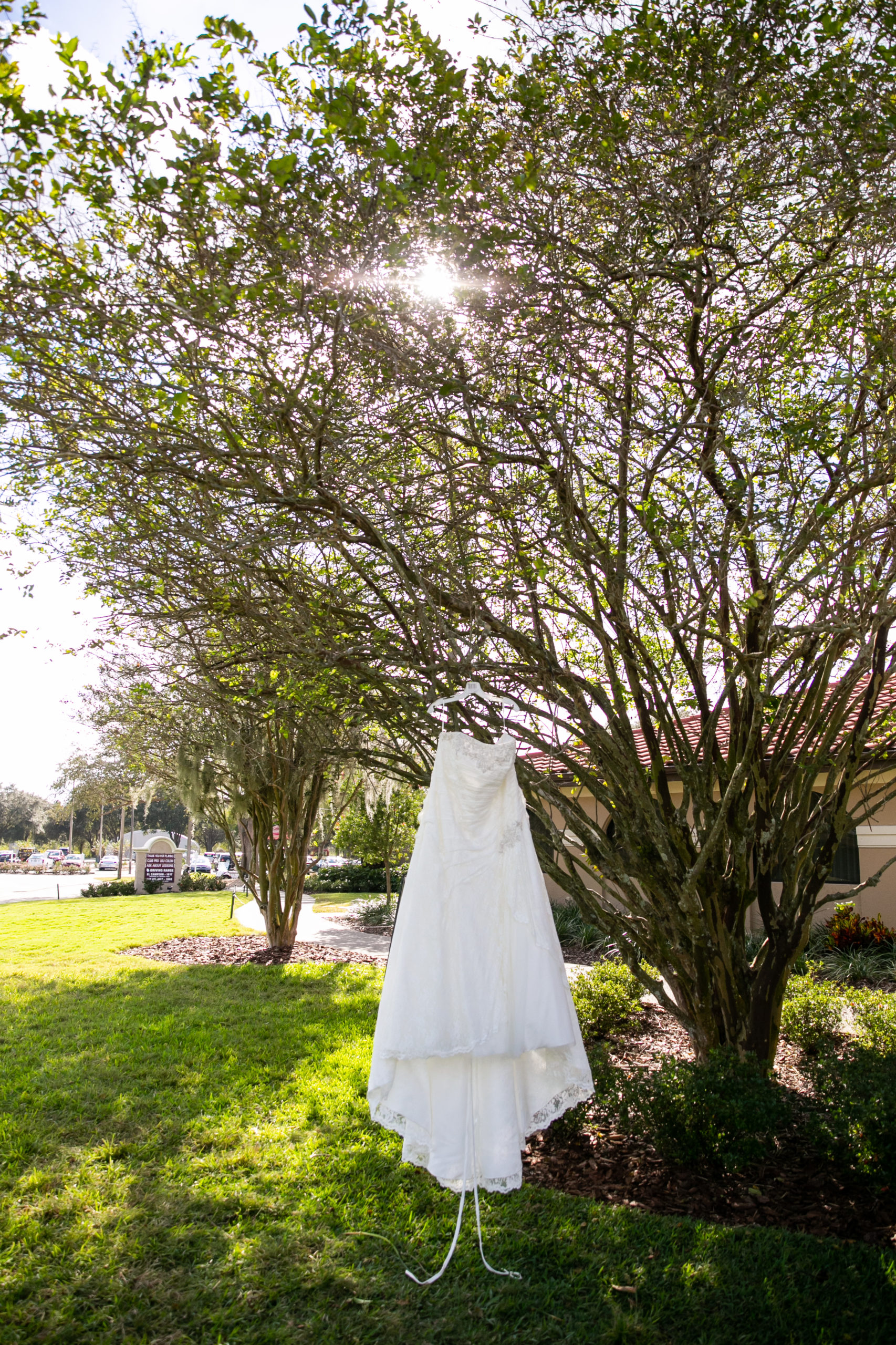 wedding dress in tree for vineyard inspired wedding